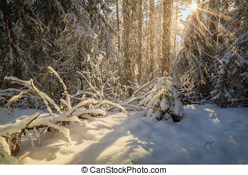 falling snow - forest winter landscape with sunlight and...