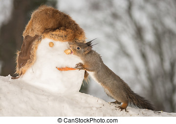 nose eater - red squirrels eating the nose of snowmans head
