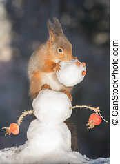 snowmans head - red squirrels on snowman with snowmans head