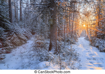 two paths in snow landscape with bird house and tree in the...
