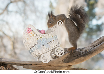 easter treasure - red squirrel with stroller and eggs