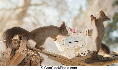 happy walk - red squirrels with stroller and eggs