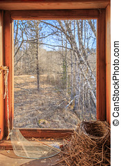bird nest in a house wirh broken window with view to the...