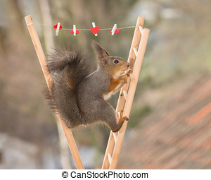 hanging hearts - red squirrel standing between 2 stairs with...