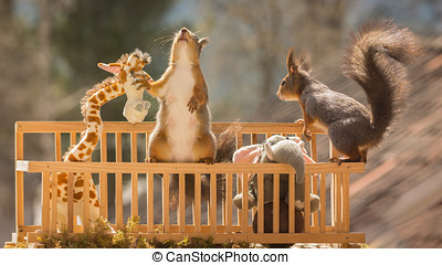 invasion - red squirrel in a box with a elephant and giraffe