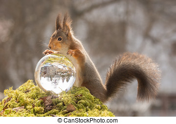 mystique - red squirrel looking in krystal ball with blurry...