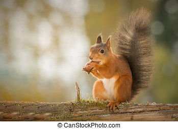 nuts to love