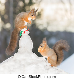 snowmans cap - red squirrel on a snowman while another...