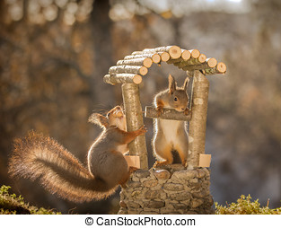 The wishing well - red squirrels standing with a wishing...