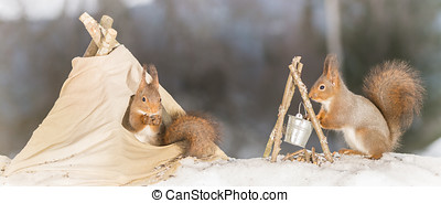 time to eat - red squirrels in snow with teepee and camp...