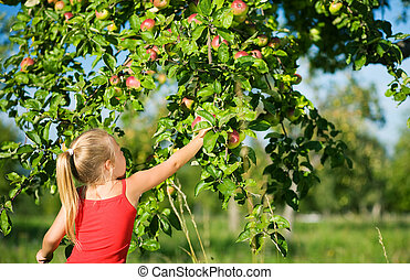 Picking apples - little girl picking an apple from a tree,...