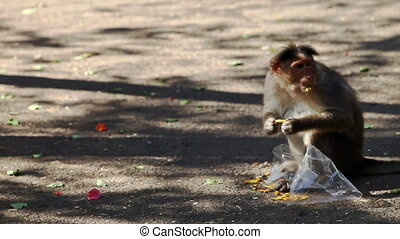 Monkey Sits on Ground Eats Food by Torn Plastic Bag - monkey...