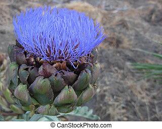 Desert flower - Purple desert flower