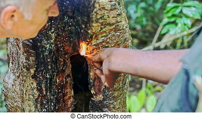 Indian Guide Shows Tree Pitch Burning to Tourists in Park -...