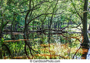 Forest trees reflection in water - Photo of forest trees...