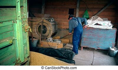 Farm worker sifting grain in farm building. Zoom in. - Farm...
