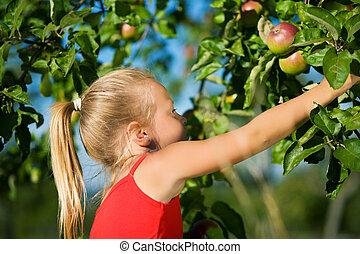 Grabbing the apple - Kleines Mdchen pflckt pfel vom Baum