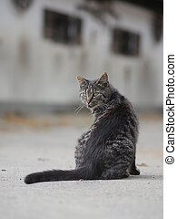 grey cat outdoors - Young cat lying on concrete surface