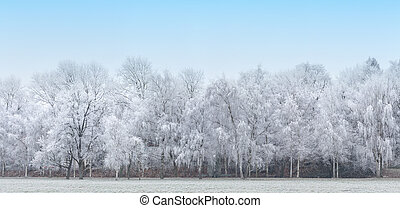Panoramic image of the winter landscape