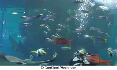 Blond woman diver in aquarium with fish - Blond woman scuba...