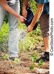 jardinagem, -, aguando, plantas