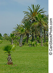 Palm trees on the lawn.