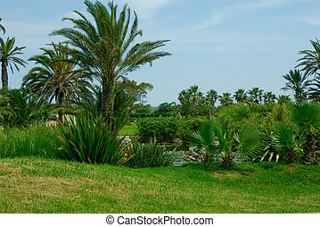 Summer scenery. Palm trees near the pond. Blue sky.