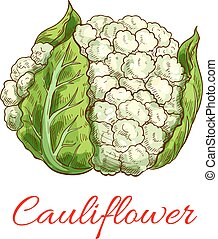 Green cauliflower vector isolated vegetable - Cauliflower...