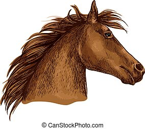 Artistic brown horse head sketch portrait - Horse portrait....