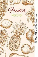 Fruit poster of natural fruits vector sketch - Fruit sketch...