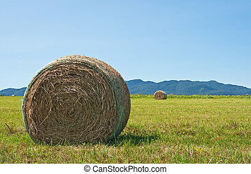 Bale of hay in the summer field