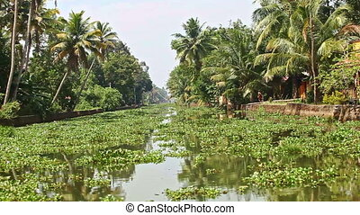 Motion along River with Water-plants by Palms in Tropics -...