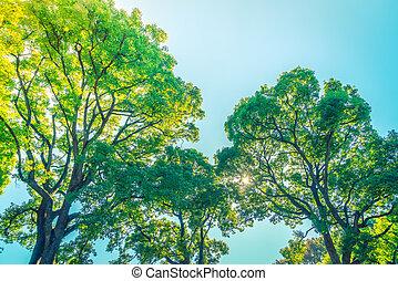 Forest trees ( Filtered image processed vintage effect. ) -...