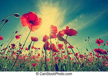 Poppy Flowers - Field of Corn Poppy Flowers