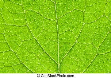 leaf - structure of leaf natural background