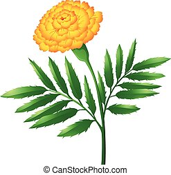 Marigold flower with green leaves illustration