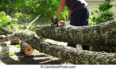 Man sawing the trunk of maple tree in garden with chainsaw....