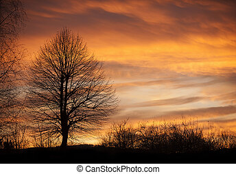 Tree in sunset time with birds - Tree in sunset time with a...