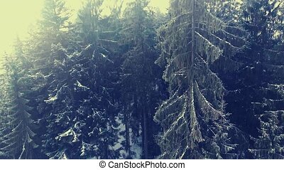 flying in a winter forest in the mountains.