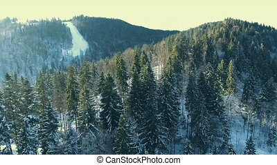 flying over a winter forest in the mountains.