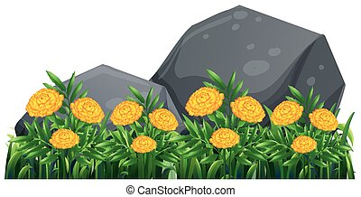 Marigold flowers in the garden illustration