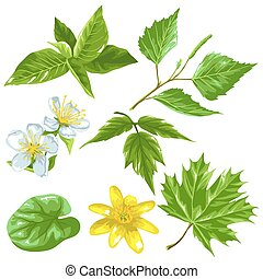 Spring green leaves and flowers. Set of plants, twig, bud -...