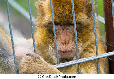 Monkey in the iron cage - Little monkey in the iron cage