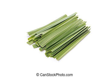 Green Lemongrass or citronella grass leaf. Studio shot...