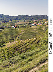 Rural mediterranean landscape with vineyards - Rural...