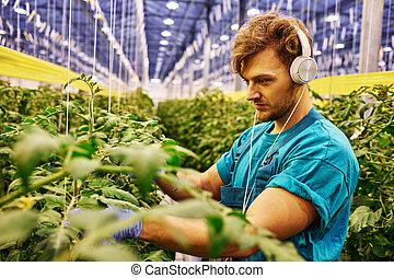 Bilder von arbeitende , hydraulische plattform, aufzug ...   {Junger landwirt bei der arbeit 35}