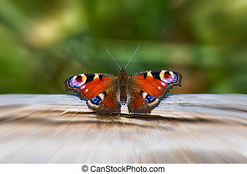 Butterfly Tagpfauenauge on a tree trunk