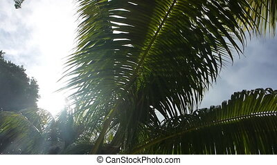 Tropical green palm trees, pan shot, summertime - Tropical...
