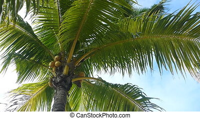 Tropical green palm tree, overhead shot