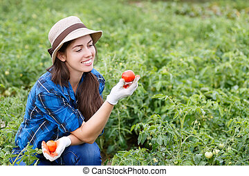 woman harvesting tomatoes in field